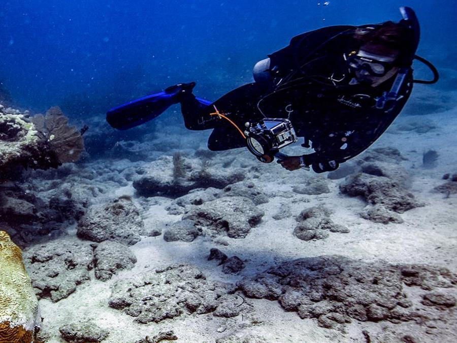 stony coral tissue-loss disease