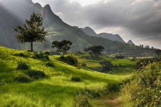 Trees arboles Etiopia