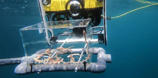 dron submarino para transportar crias de tiburon