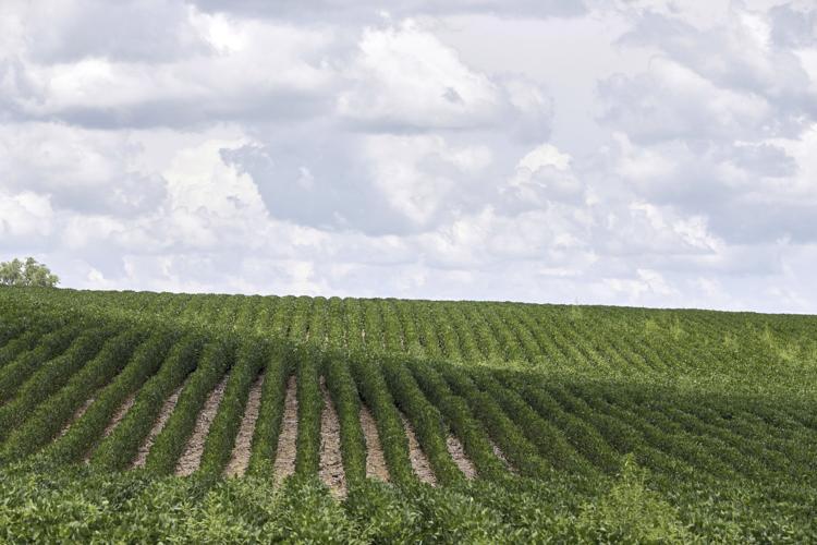 sembrio agricultura