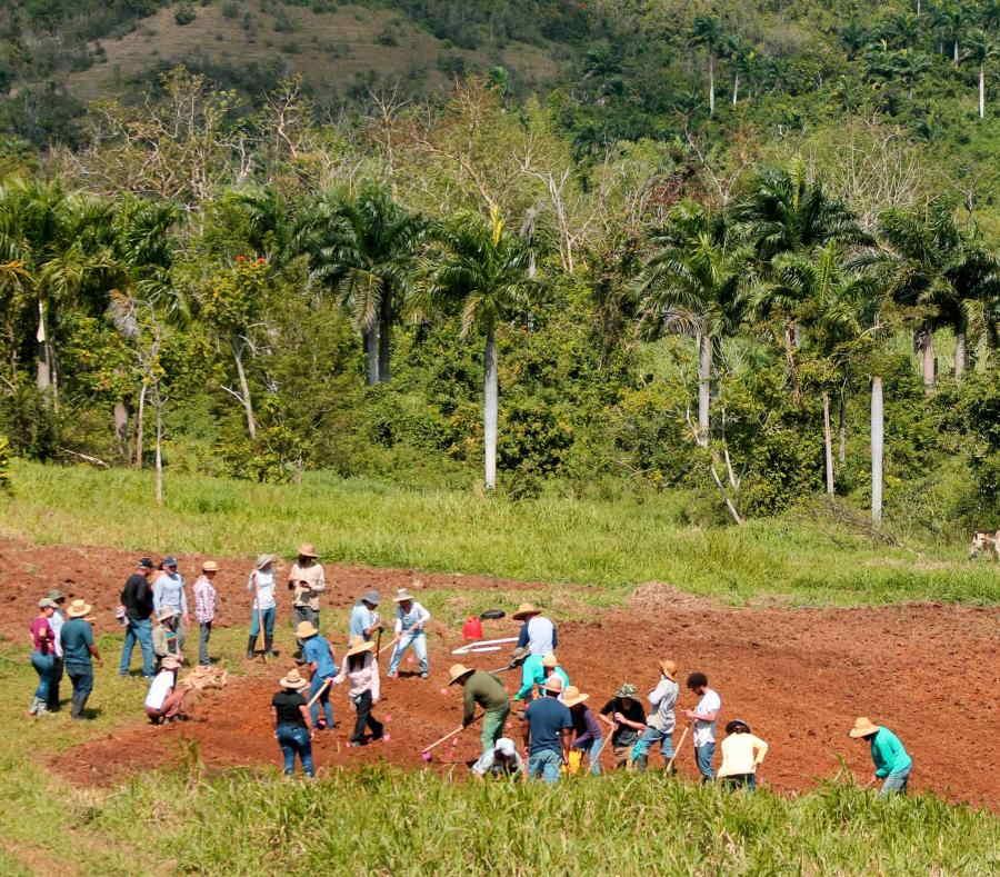Proyecto Agroecologico El Josco Bravo en Toa Alta