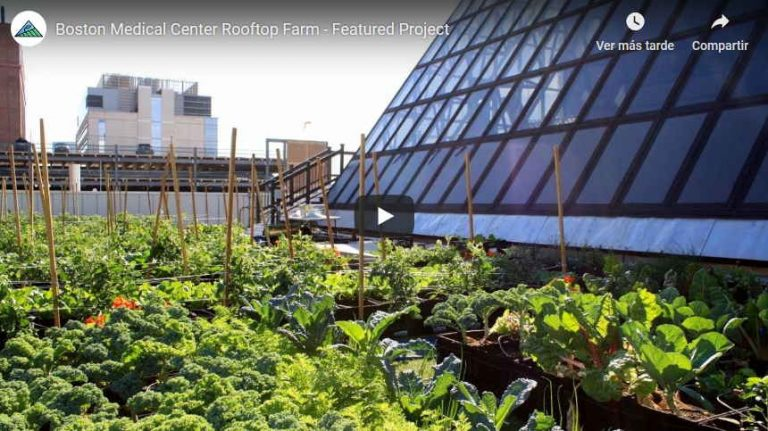 This Boston Hospital Is Feeding Patients Through Its Rooftop Farm