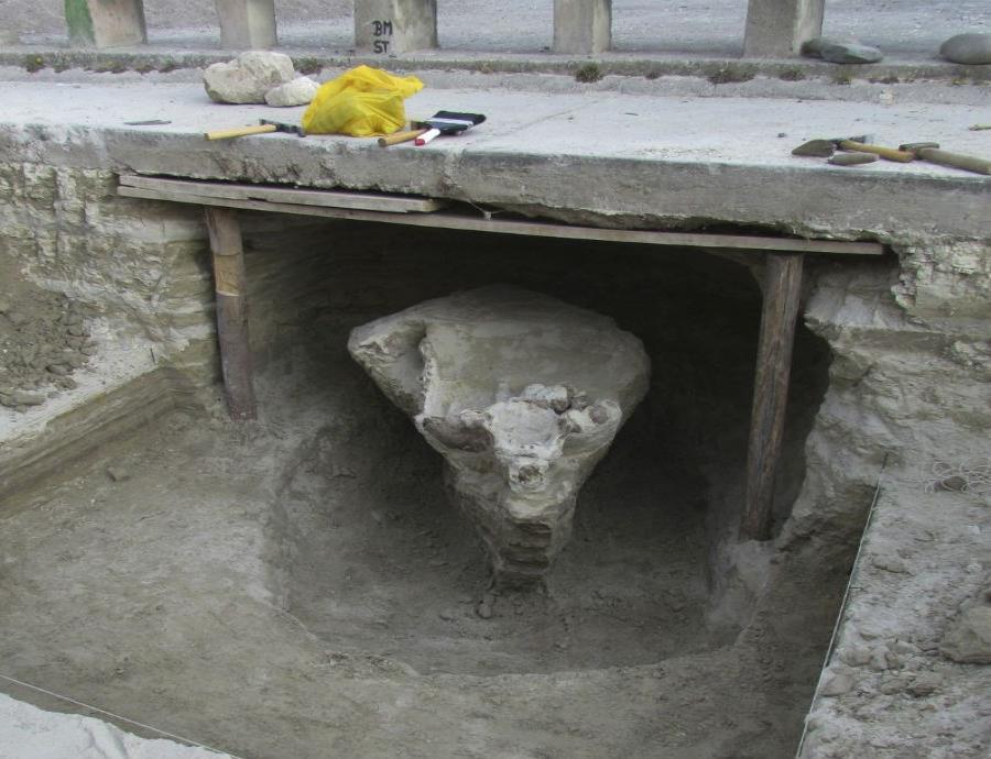 fosil toxodonte prehistorico al pavimentar una calle en Perú