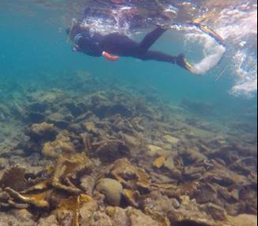 Fracturas Arrecifes Cuerno De Alce Norte De Vega Baja