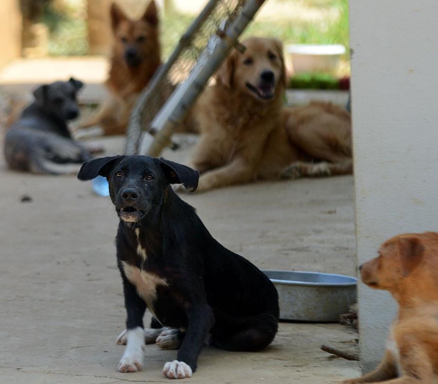 perros realengos