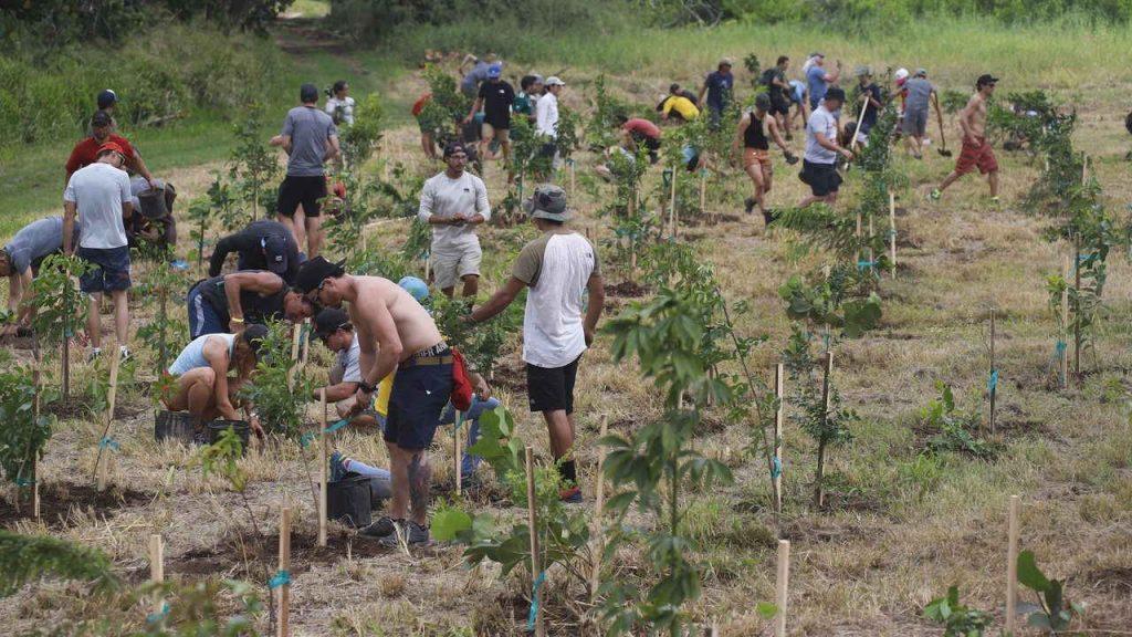 Programa De Reforestacion Habitat Puerto Rico