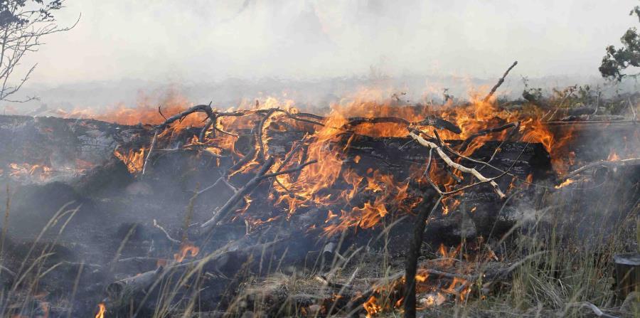 Incendios Forestales California