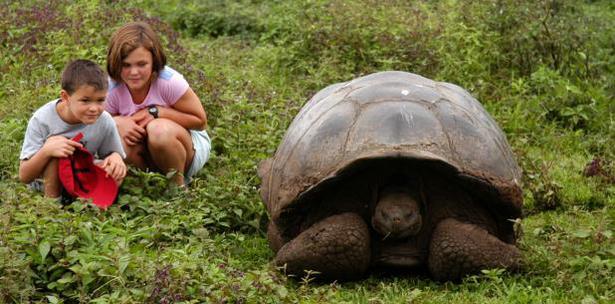 Tortugas Gigantes Galapagos
