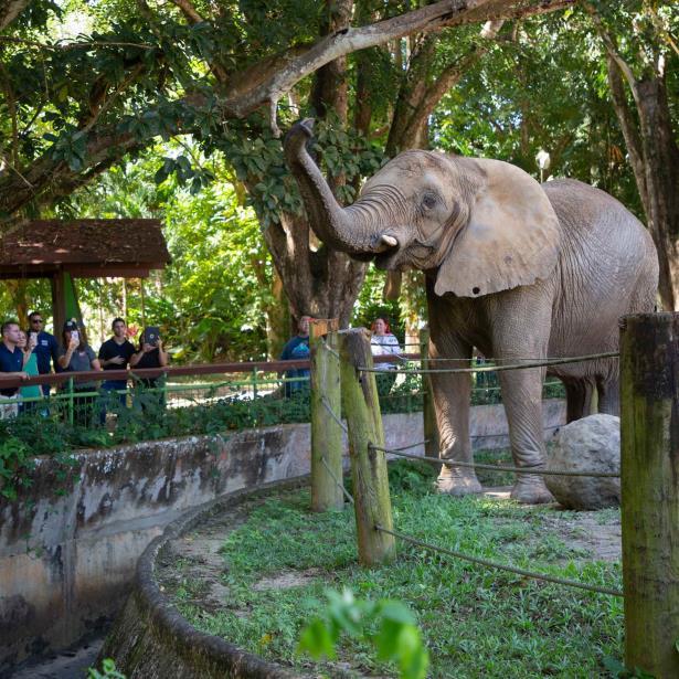 Elefante Zoologico De Mayaguez