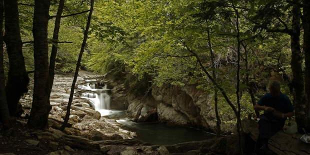 Vista De La Selva Del Irati Navarra