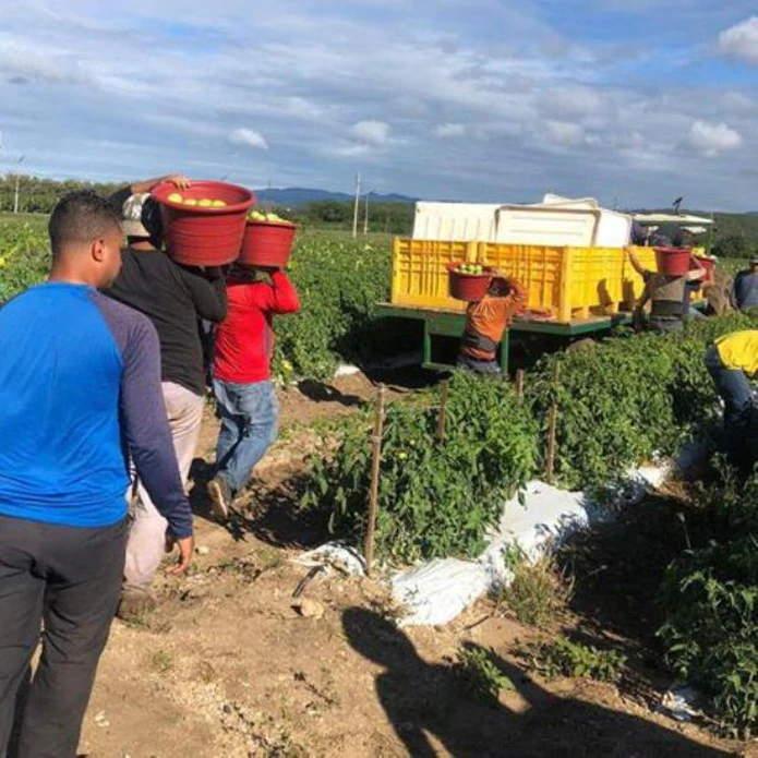 Cosechas Trabajadores Agricolas