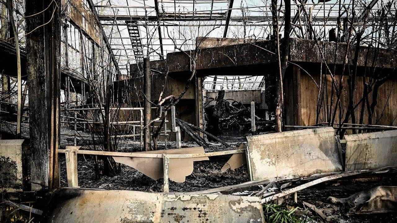 Incendio En Zoologico Aleman