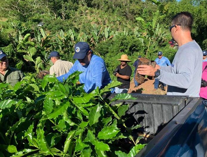 Recogida De Tomates En Santa Isabel