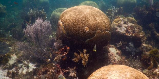 Arrecife Mesoamericano