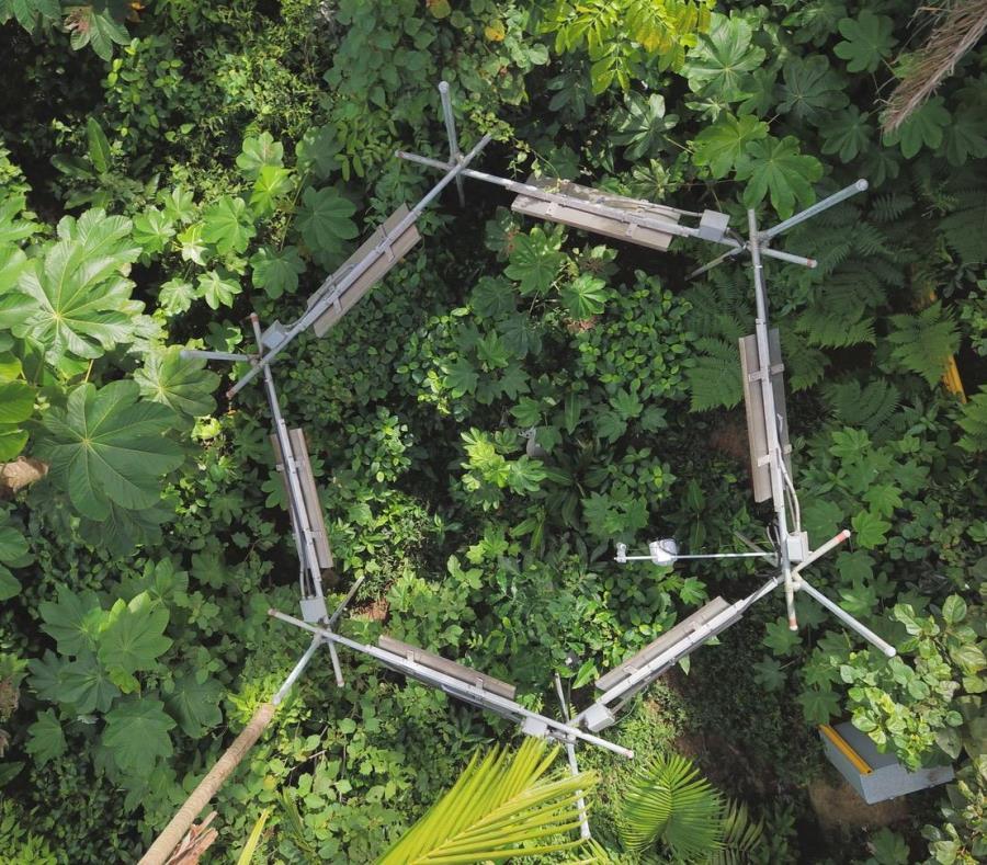 Instituto De Dasonomia Tropical
