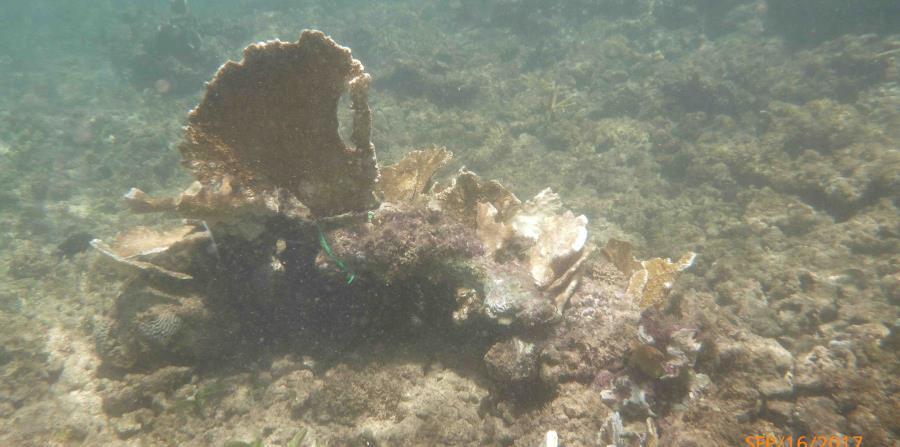 Arrecifes De Coral Como Estructuras Esenciales