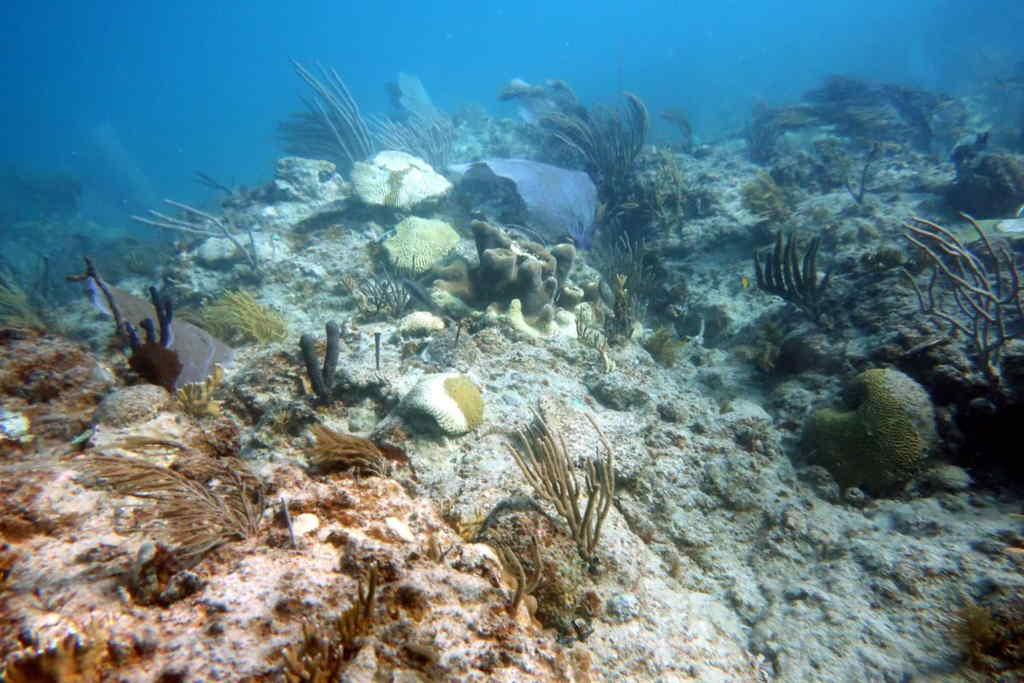 Sindrome Blanco Isla Arrecife Punta Tamarindo Chico En Culebra