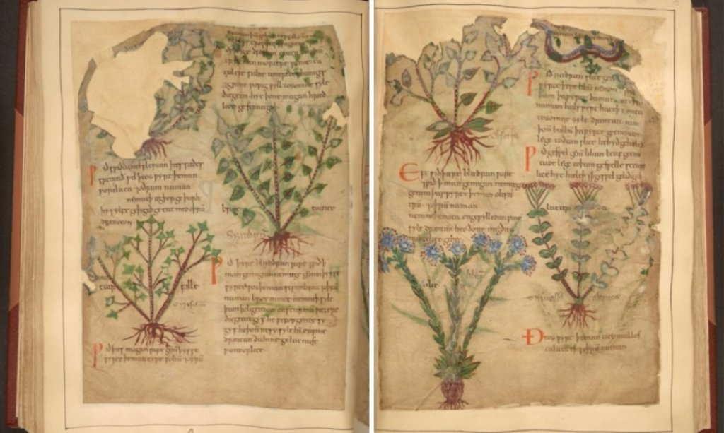 Libro De Hierbas Medicinales De 1000 Anos Disponible En Linea