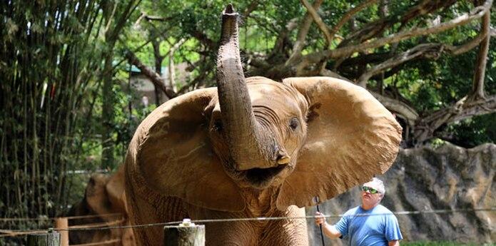 Zoologico Elefante