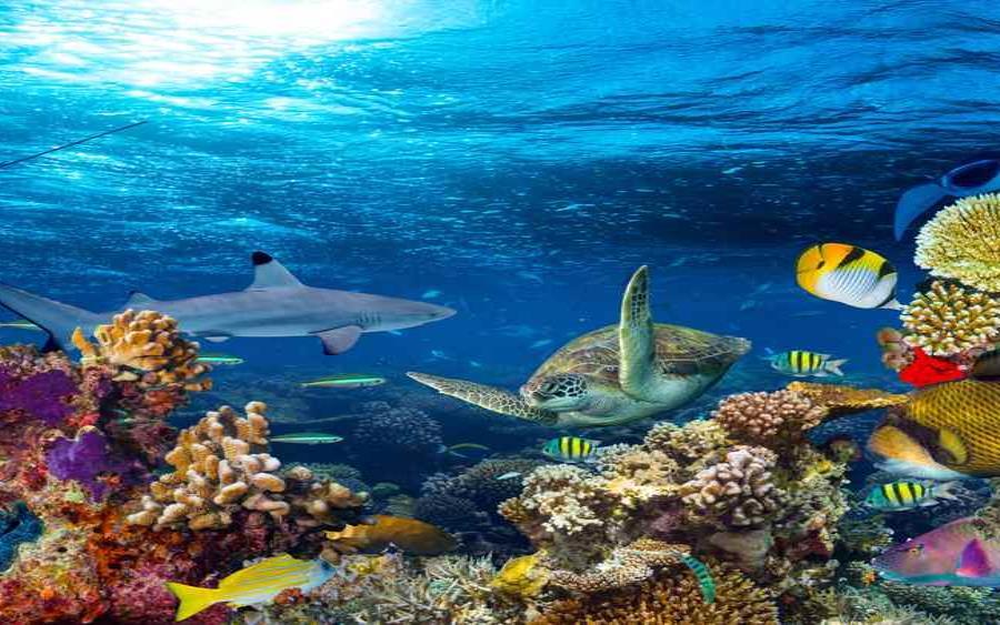 Paisaje Submarino De Arrecifes De Coral