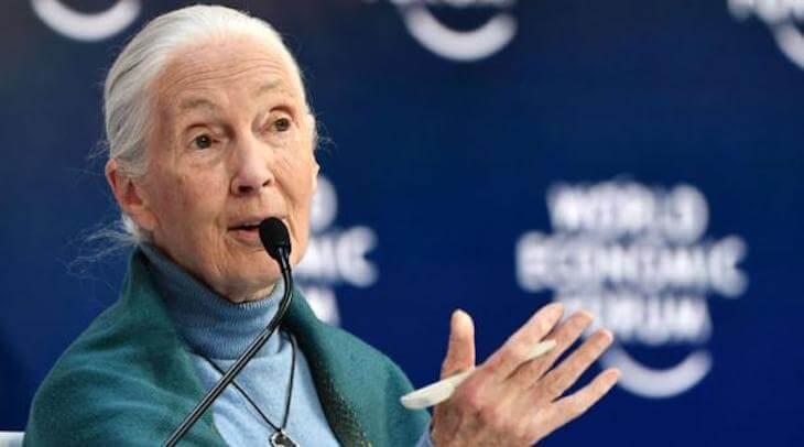 Primatologa Y Activista Ambiental Jane Goodall