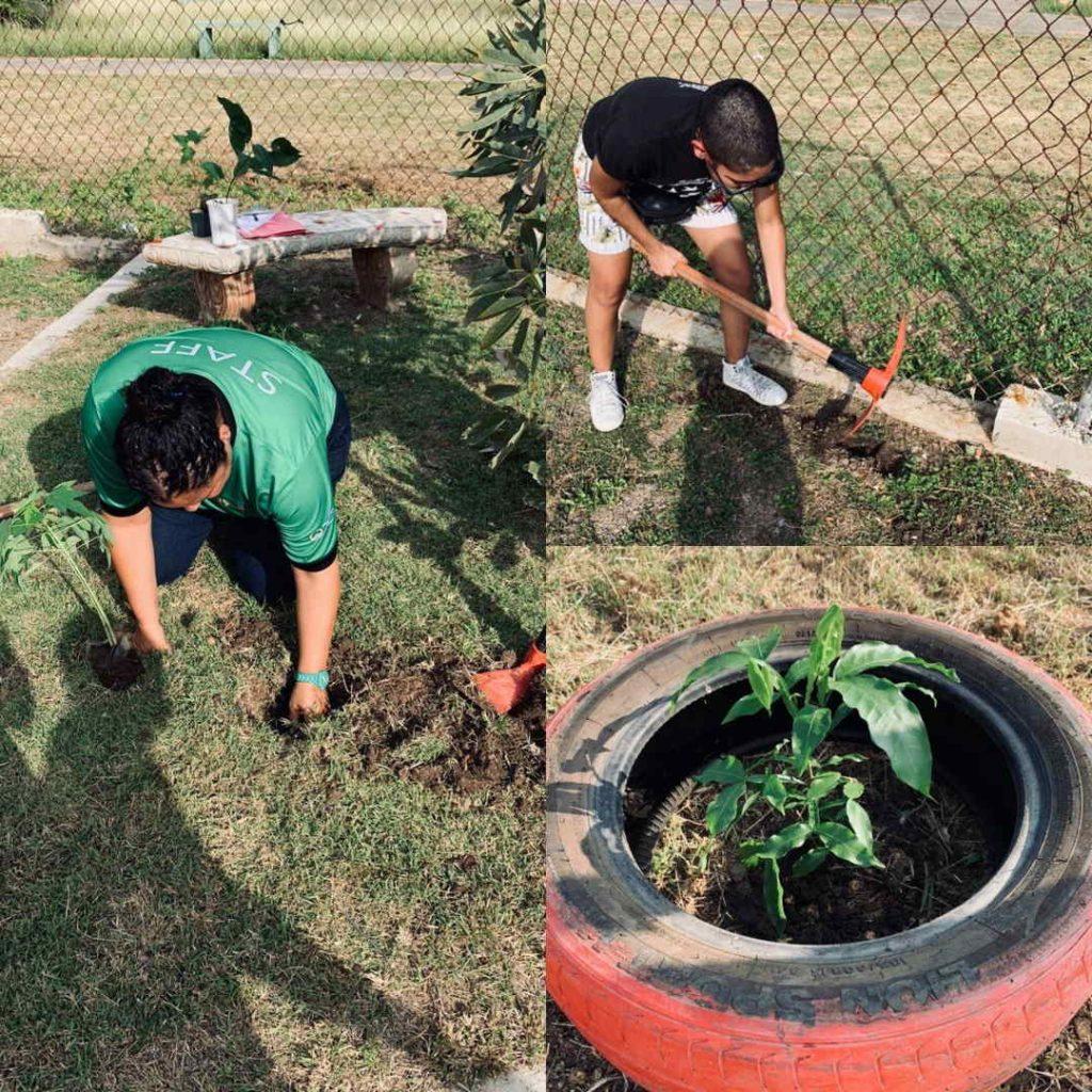 Reforestar Desde El Hogar
