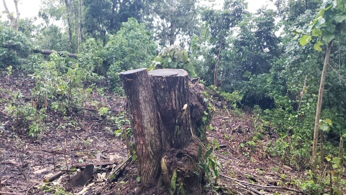 El Capítulo de Puerto Rico de la Academia Americana de Pediatría declaró que esta práctica de la tala de árboles afectará de manera directa e indirecta la salud de todos en la isla. (Suministrada)